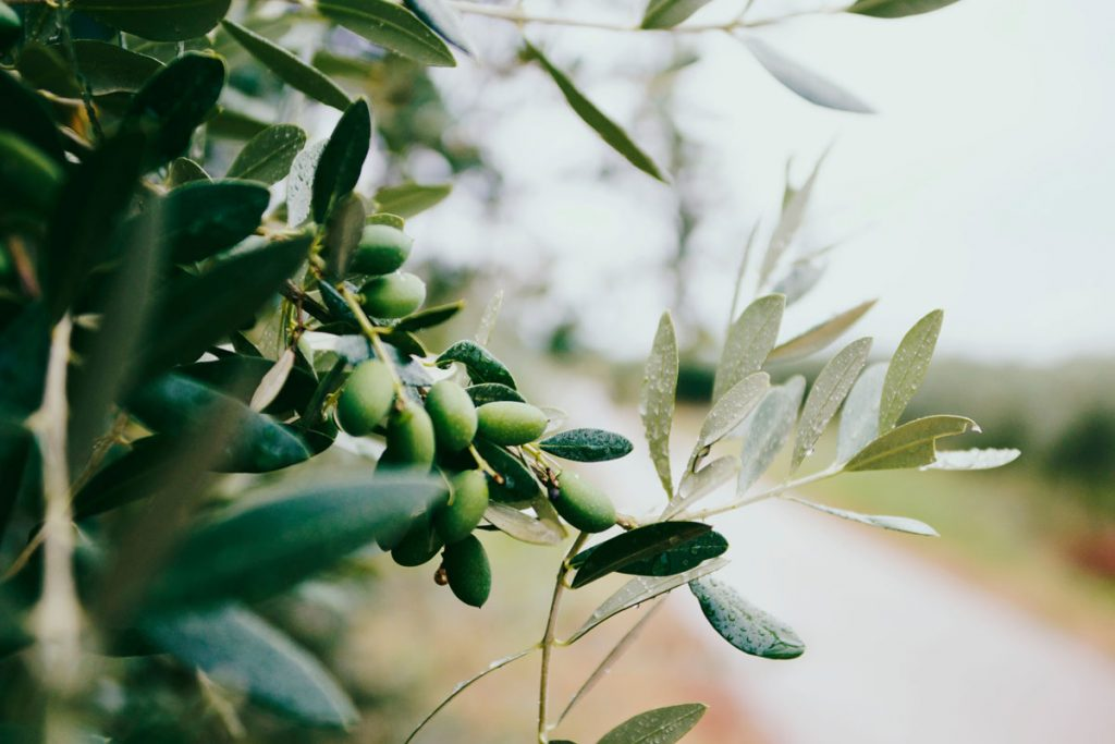 Majorca, olive oil with designation origin since 2002